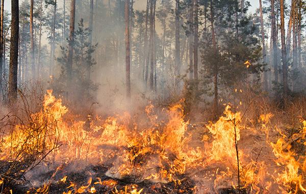 Viranomaisyhteistyö ja Virve ja metsäpalot